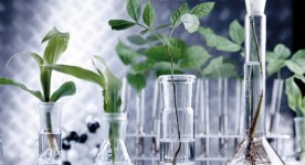 Tissue culture techniques